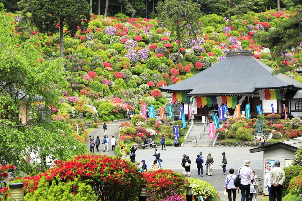 別格本山 塩船観音寺 | おうめ観光ガイド